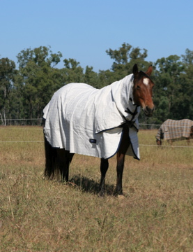 Summer Breeze Poly/Cotton Double Ripstop