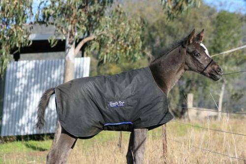 Foal Coat