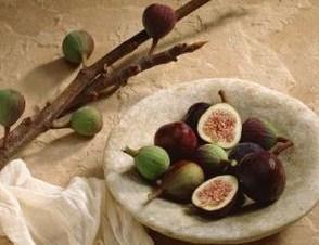 Wholesale Fig Trees b008