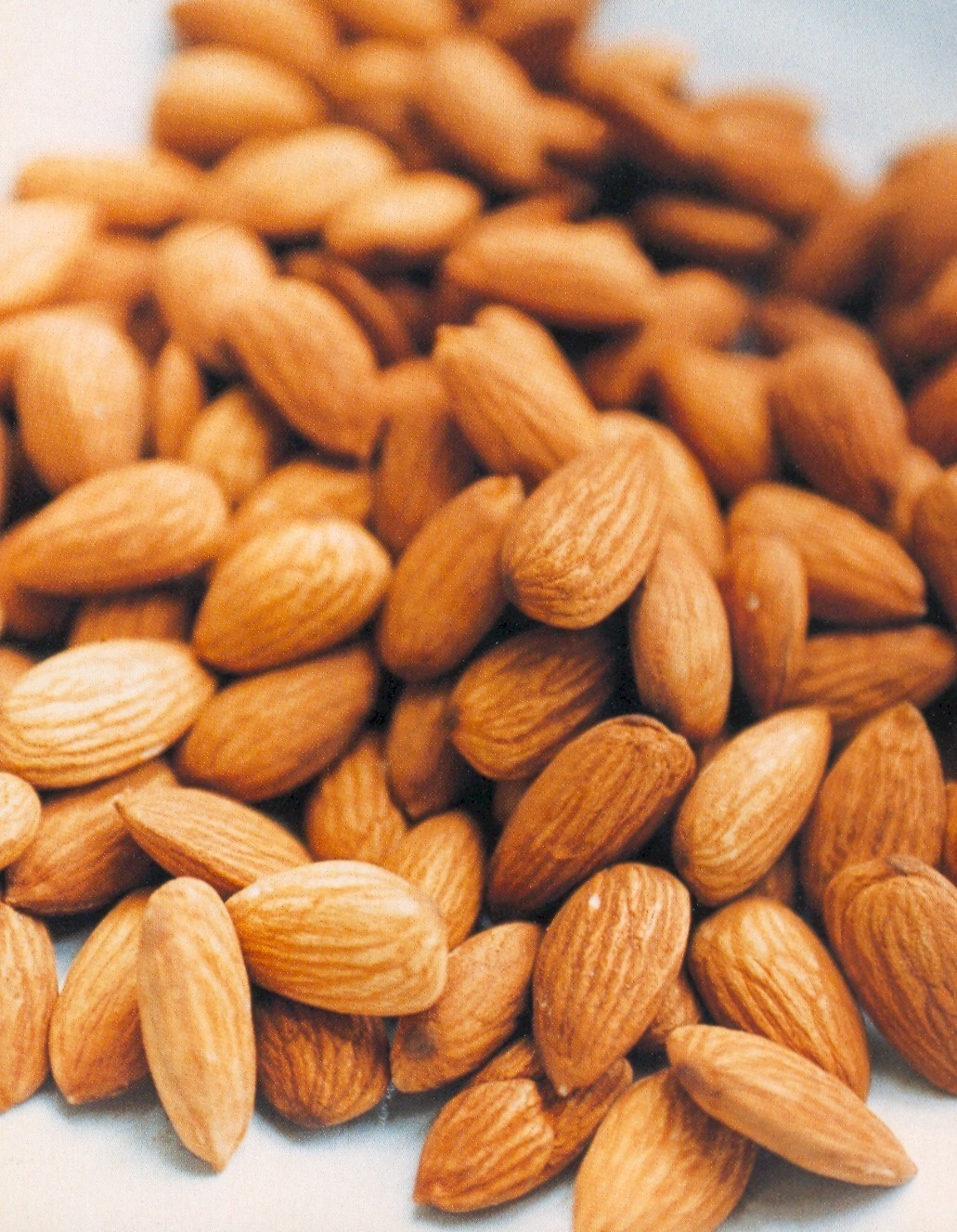 Wholesale Almond Trees 00124