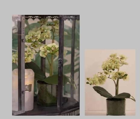 Orkide 3-grenet-sart gul i glas potte