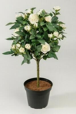 Rosentræ