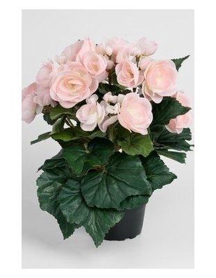 Pegonia i potte / Kunstige blomster