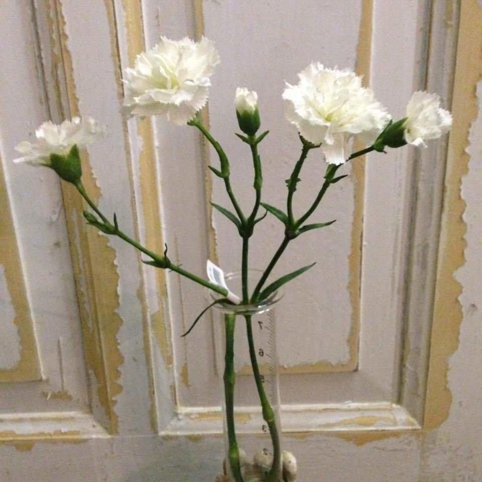 Nelike på stilk / Kunstige blomster