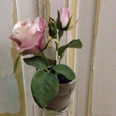 Rose i potte mini