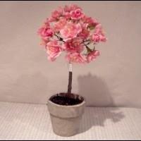Kirsebær træ mini