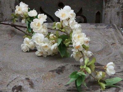 Æblegren hvid
