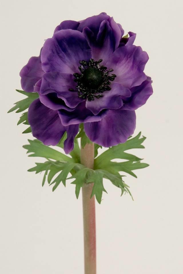 Dekorationsblomster - Anemone. H45 cm