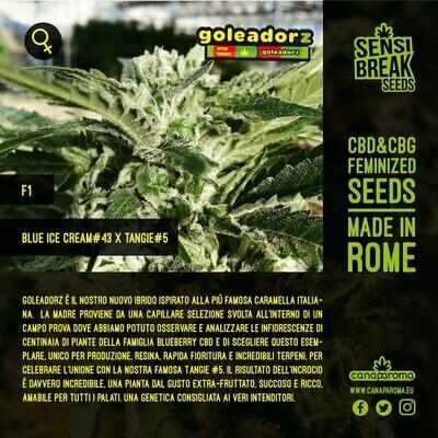 Goleadorz - 10 feminized seed (limited edition)