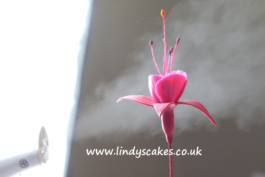 Steaming a life-like sugar fuchsia flower