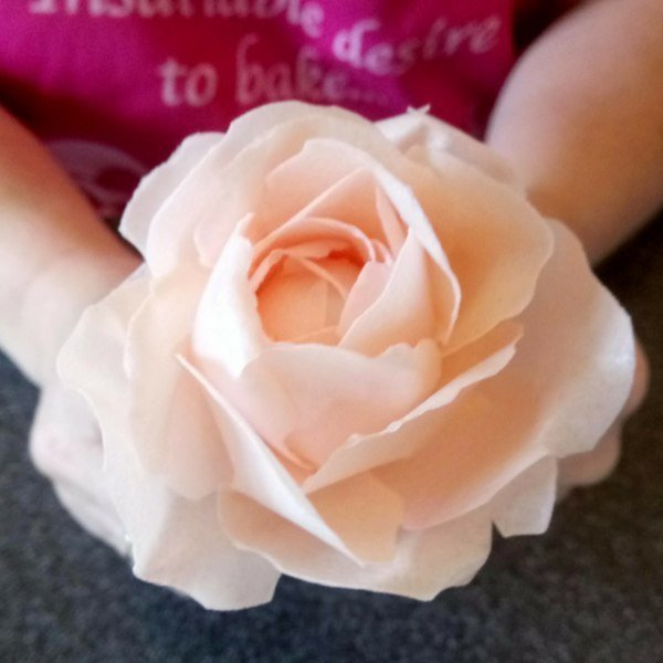 How to make sugar roses class with Lindy Smith Ludlow, SHROPSHIRE 00043