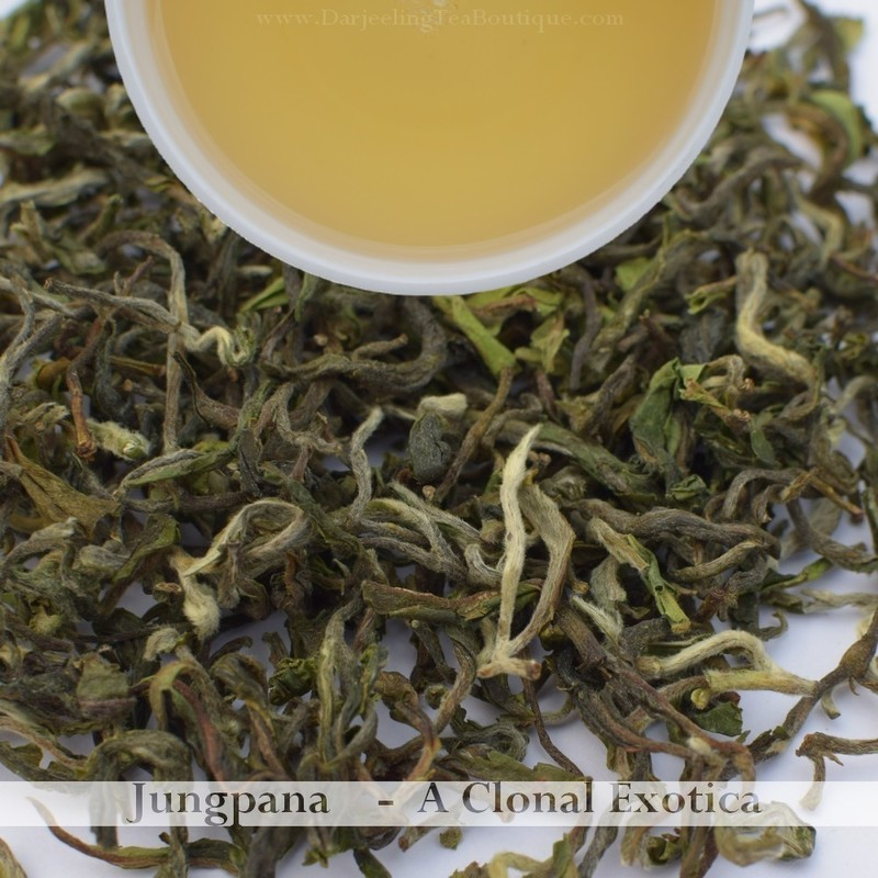 HEAVENLY & DELICIOUS CLONAL EXOTICA - JUNGPANA  - Darjeeling 1st flush 2019  - 50gm (1.76oz)