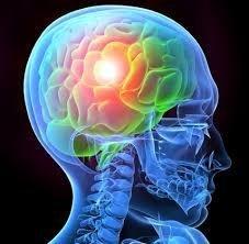 Brain Support Shake