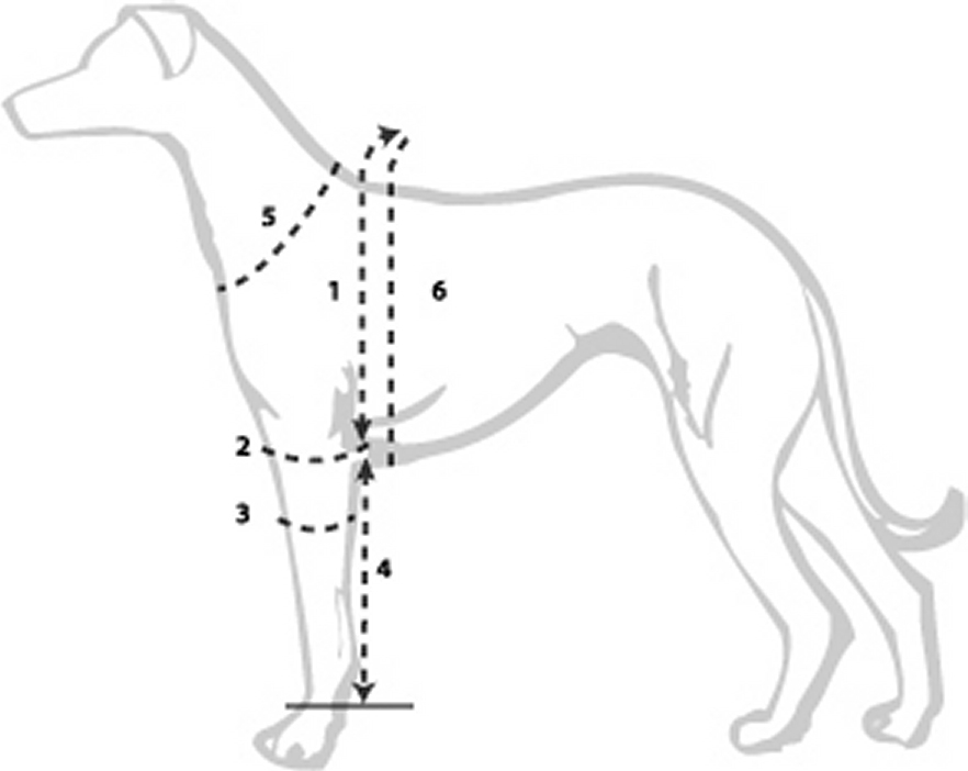 Meten omvang elleboog (punt 2)