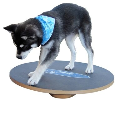 Wobble Board