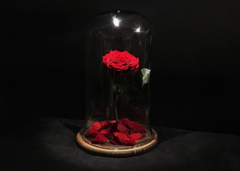 la v ritable rose ternelle de la belle et la b te. Black Bedroom Furniture Sets. Home Design Ideas