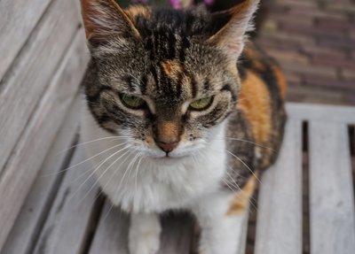 My cat 4