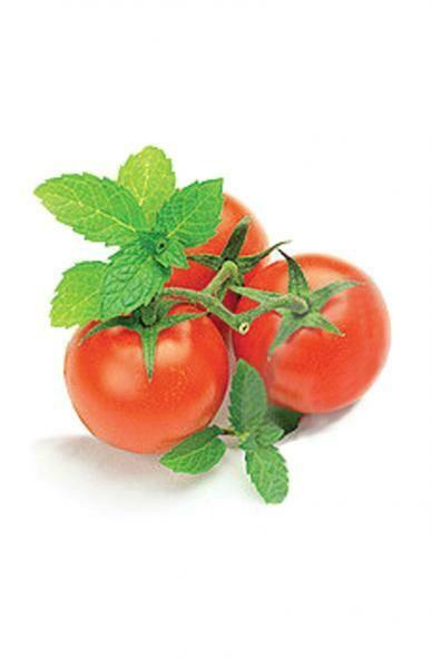 Recharge Mini tomates PFR-TOC de Spherebrooke