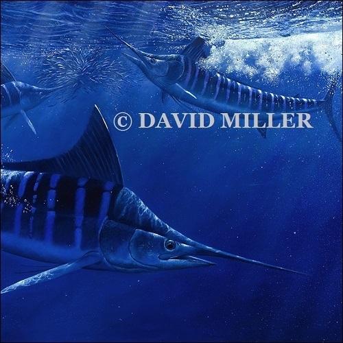 David Miller -  'Marlin Attack' Limited Edition Print