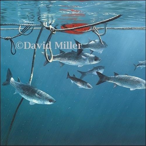 David Miller - 'Mullet Haven' Print