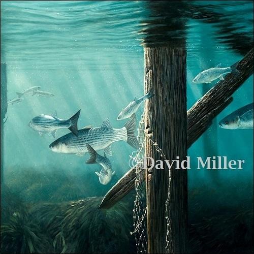 David Miller - 'Pier Mullet' Print