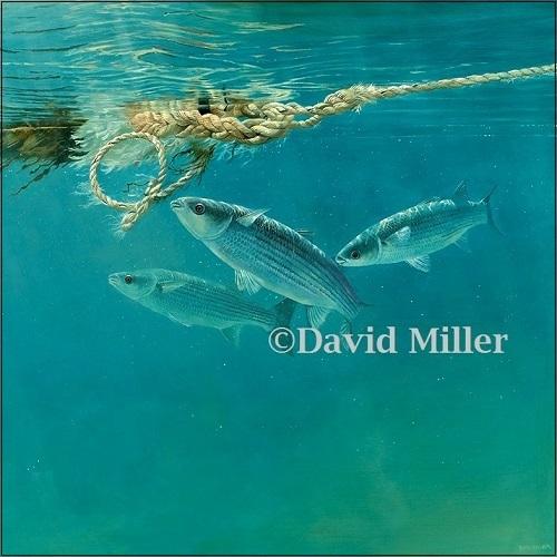 David Miller - 'Harbour Mullet II' Print