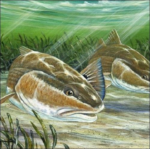 Steve Whitlock 'Prowlers' - Redfish
