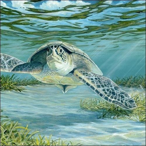 Steve Whitlock 'Sea Turtle'