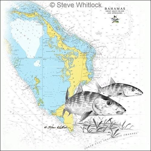 Steve Whitlock 'Abaco Bonefish Chart