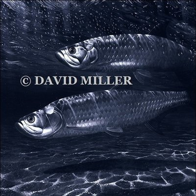 David Miller - 'Night of the Silver Kings' Tarpon Limited Edition Print
