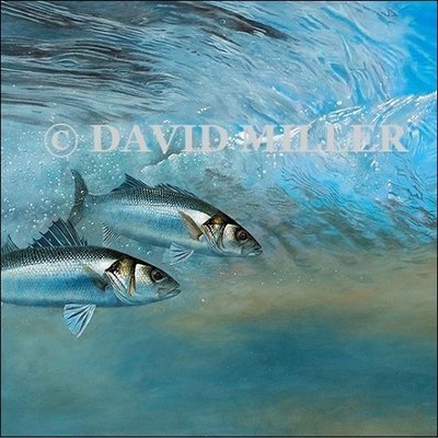 David Miller - 'Bass in the Surf' Print