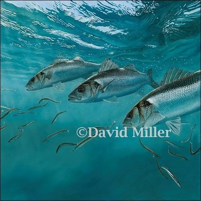 David Miller - 'Bass and Sand Eels II' Print