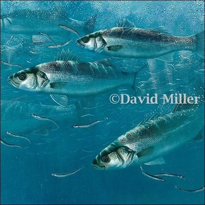 David Miller - 'Bass and Sand Eels' Print
