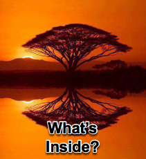 What's Inside - 9/16/15