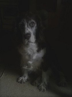 Portrait of Cleo, 11