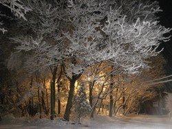 "Crystal Trees (Saylorsburg, PA), 16""x 20"" Canvas, Priced Each"