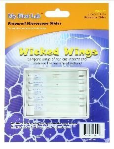 Wicked Wings 5pc Slide Set, Priced Per Set
