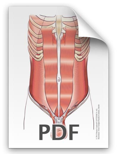 PDF: Bauchmuskeln, Pyramidalis Mann