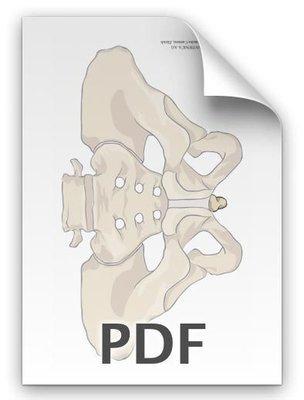 PDF: Becken, Steissbein betont