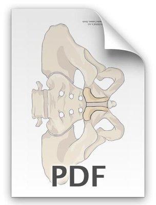PDF: Becken, Schambein betont