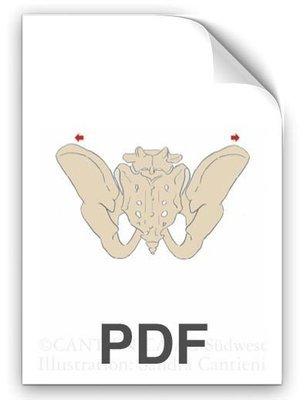 PDF: Kreuzbeingelenke Beckenschaufeln