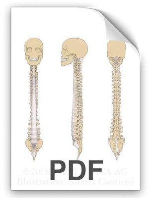 PDF: Longitudinal Ligament (Längsband)