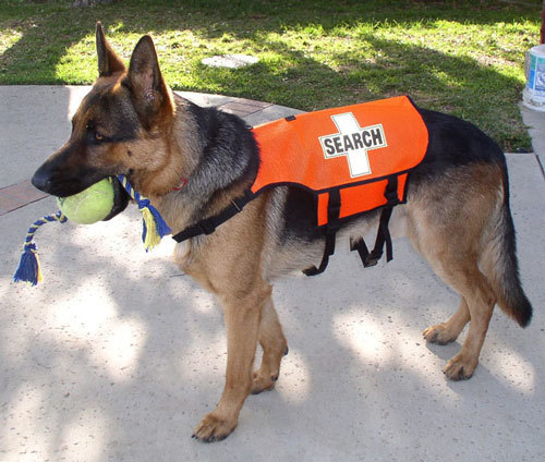 Standard K-9 Vest (Mesh): SEARCH Cross