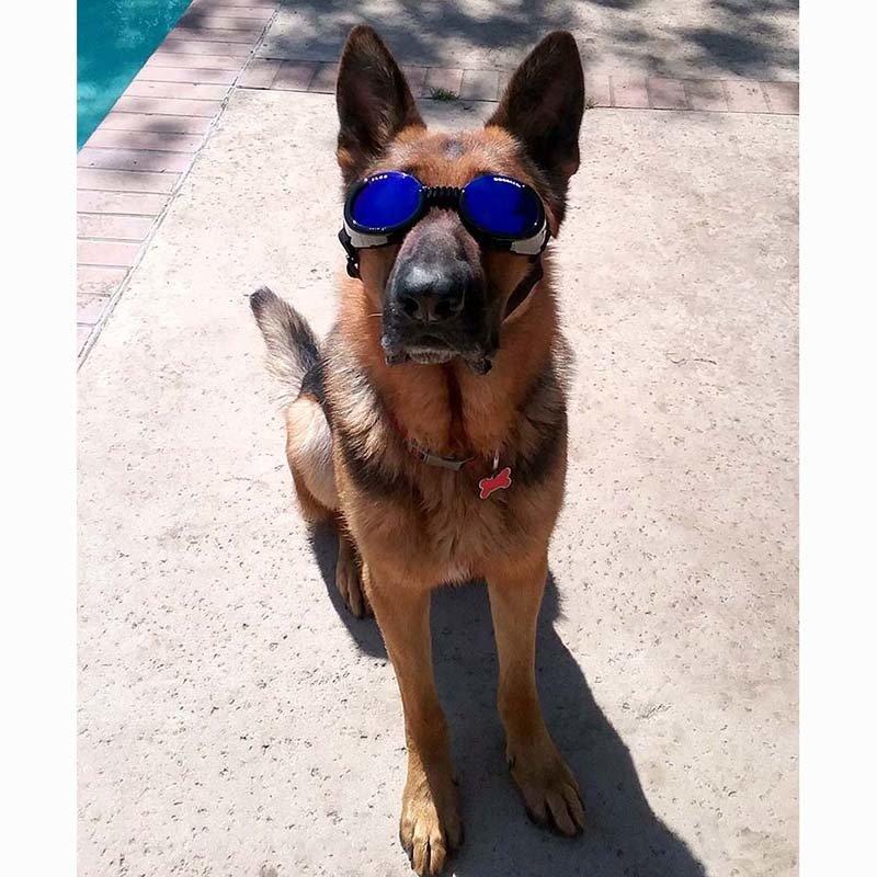 K-9 Goggles
