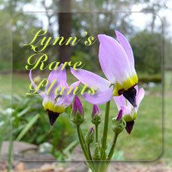 Lynn's Rare Plants Store
