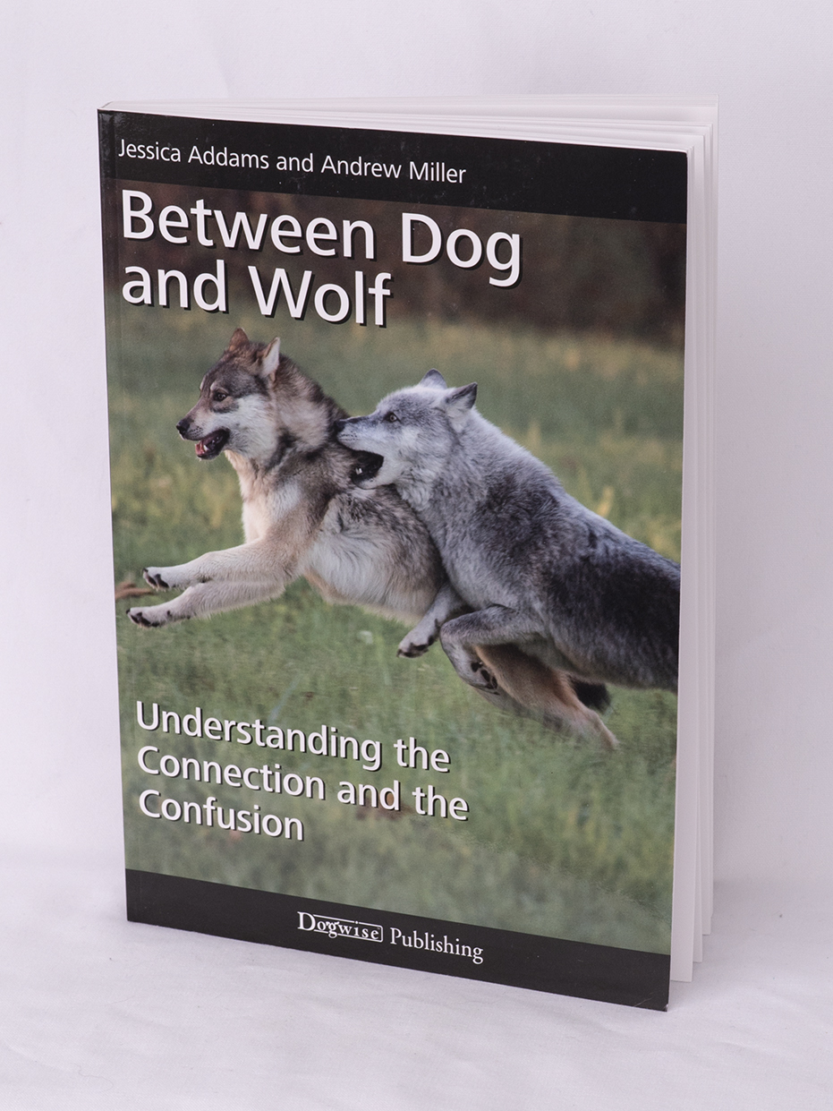 Between Dog and Wolf 00025