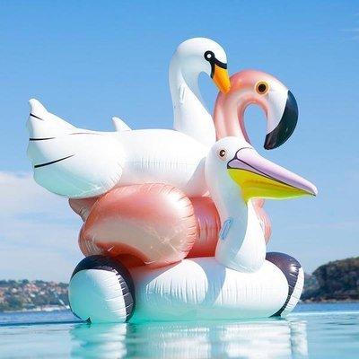 Pato Cisne Flamingo Flotante