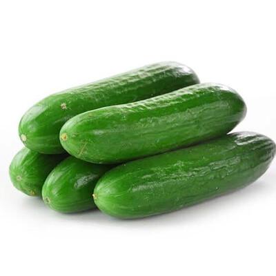 Pepino (salada) - Kg