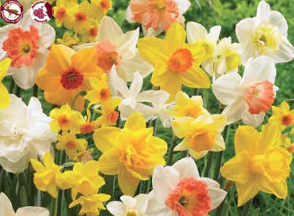 Spring Mixture - Bulbs
