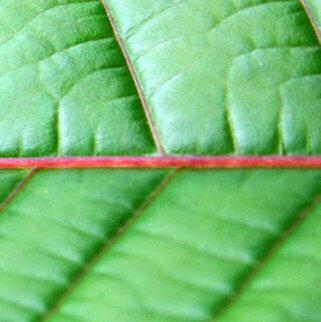 Horned Red